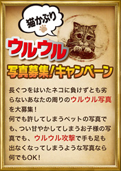 映画『長ぐつをはいたネコ』猫かぶりウルウル写真募集キャンペーン